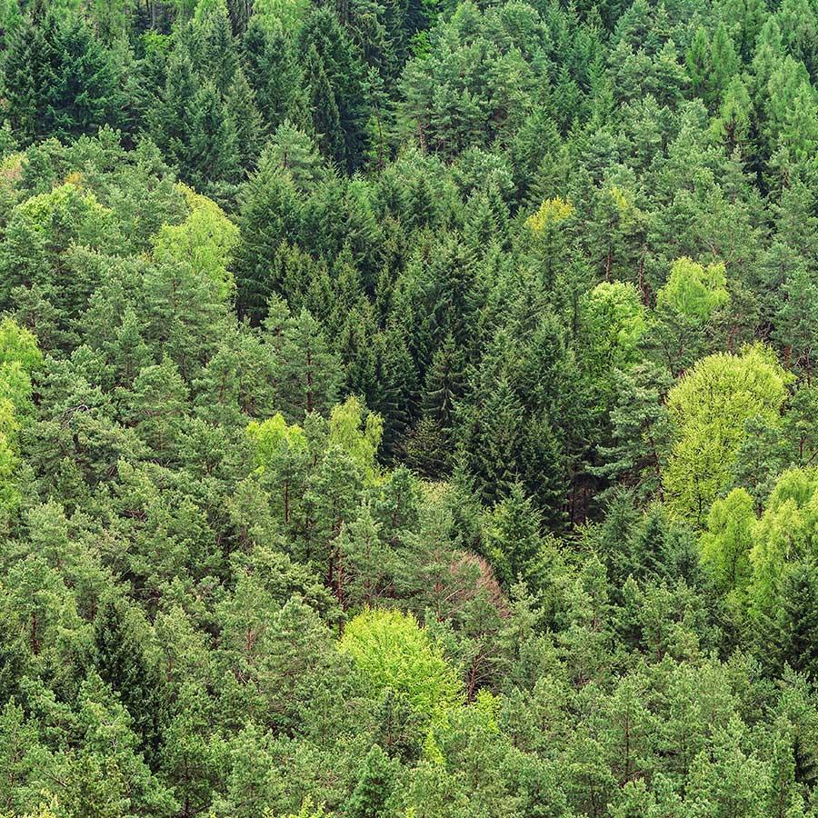 Marché forestier